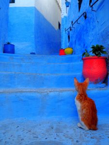 Chefchaouen- My Bucket List 'Blue City' 13